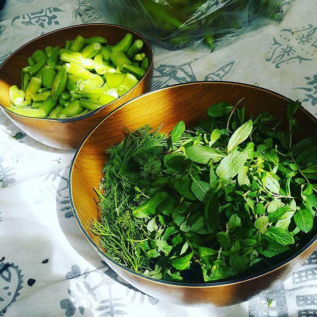 Зелень для восстановления менструации