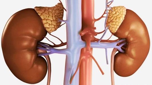 Аменорея при опухоли надпочечников