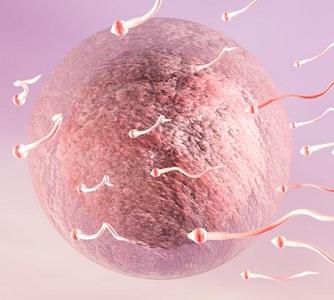Менструация после неудачного ЭКО
