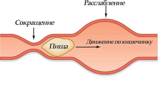 Причины диареи при овуляции