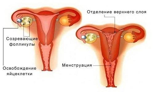 Менструация при грудном вскармливании