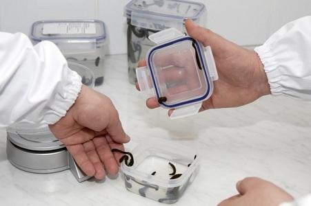 Пиявки в гинекологии при подготовке к беременности