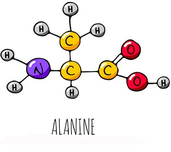 Препарат Бета-Аланин при климаксе