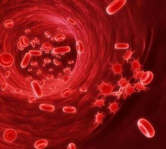 Тромбоциты у женщин во время месячных и беременности