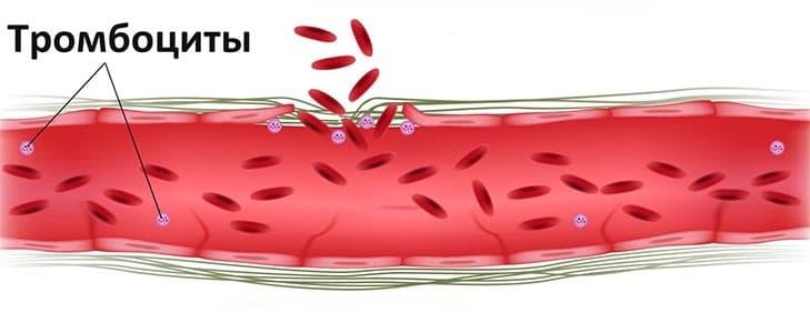 Тромбоциты у женщин во время месячных