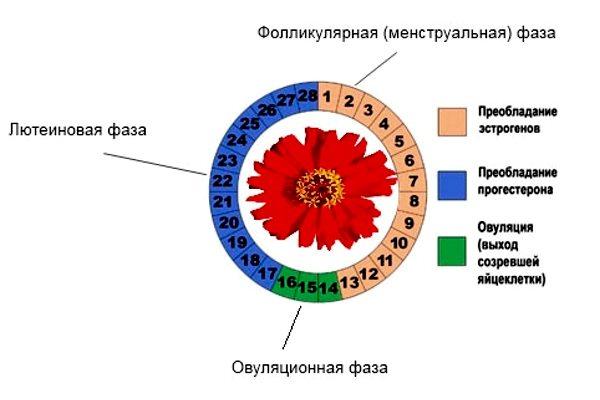 Изменения в эндокринной системе женщины
