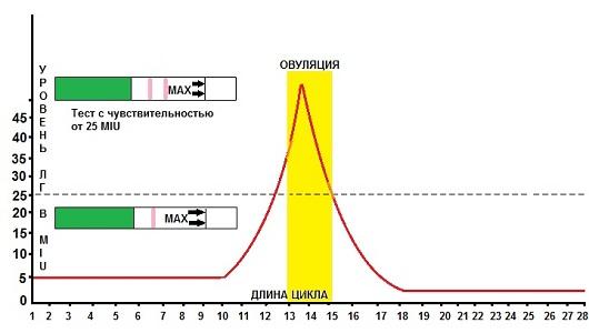 Определение овуляции с помощью тест-полосок