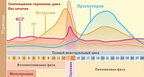 Влияние гормонов на базальную температуру